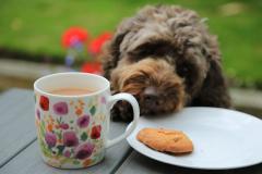 'Afternoon Tea Leaf' by Paul Smith