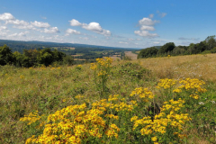 'Place For An Afternoon Ramble' by Peter Shelley