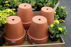 'Flower Pots' by Millicent Lake
