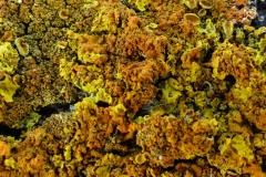 'Lichen' by Camille Humphrey
