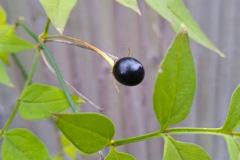 'Black Pearl' by Faith Docker