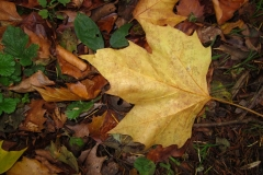 'Autumn Leaves' by David Ager