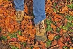 'Crisp Leaves' by Mike Thurner