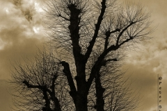 Sepia-Silhouette-by-PeterShelley