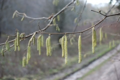 'Catkins' by David Ager