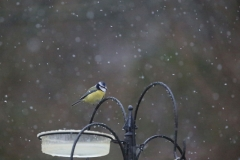 'Feed the birds this winter' by Paul Smith