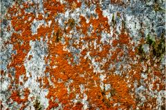 'Churchyard Lichens' by Angela Rixon