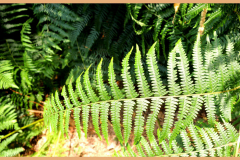 'Lazy Fern' by Graham Speed