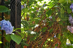 'Web' by Mike Thurner