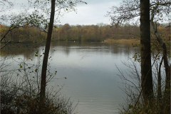'Lake view' by Julia Forsyth
