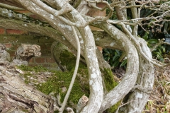 'Tangled Tree Trunks' by Millicent Lake