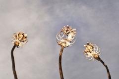 'Poppy Capsules' by Angela Rixon