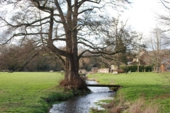 'Abinger Stream' by David Ager