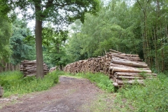 'Log Piles' by Millicent Lake