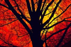 'Wood Silhouette' by Peter Shelley