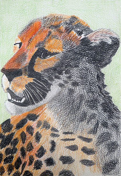 Leopard by Frances Lawrence