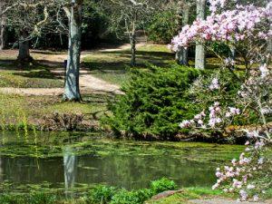 Jubilee-Pond-at-Exbury