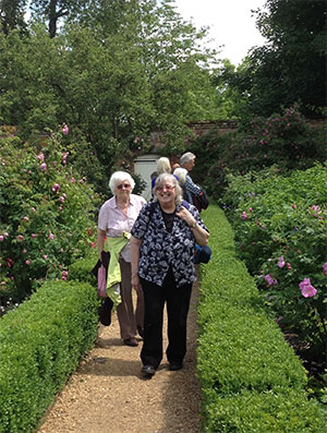 Members enjoy a stroll among Mottisfont's National Collection of old-fashioned roses (photo: Sue Grant)