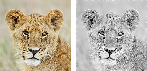 'Young Lion' in the original and after employing the Graphic Novel filter