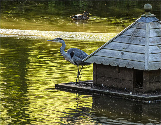 Fishing Expedition (Faith Docker)
