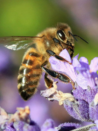 Julia-3-Busy-Bee